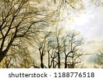 vintage textured bare branches... | Shutterstock . vector #1188776518