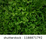 green leaves pattern background.... | Shutterstock . vector #1188871792