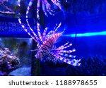 zebrafish   firefish  tastyfish ... | Shutterstock . vector #1188978655