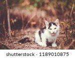 cute tabby kitten laying on the ... | Shutterstock . vector #1189010875