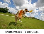 Dog Jumping After Flying Disc