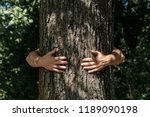 human hands hug  wrap a tree.... | Shutterstock . vector #1189090198