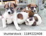 Stock photo puppies were sleepy and cute 1189222408