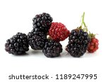 blackberries and unripe... | Shutterstock . vector #1189247995
