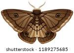 moth closeup white background...   Shutterstock .eps vector #1189275685