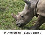 a white rhinoceros ... | Shutterstock . vector #1189318858