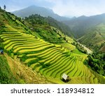 Rice Fields Mu Cang Chai ...