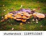 Wild  Mushrooms  Toad Stools ...
