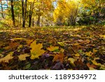 fallen leaves close up in a... | Shutterstock . vector #1189534972
