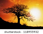 Alone Tree With Sun And Color...