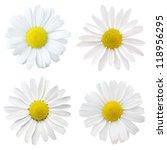 four white flowers | Shutterstock . vector #118956295