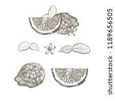 hand drawn set kaffir lime. ... | Shutterstock .eps vector #1189656505