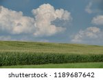 rows and rows of corn on an... | Shutterstock . vector #1189687642