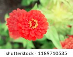 top view close up many red... | Shutterstock . vector #1189710535
