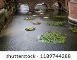 autumn outdoor floral...   Shutterstock . vector #1189744288