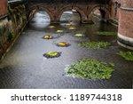 autumn outdoor floral...   Shutterstock . vector #1189744318