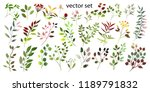 watercolor illustration.... | Shutterstock .eps vector #1189791832