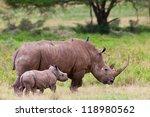 white rhinoceros or square... | Shutterstock . vector #118980562