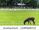 blurred photo mule is a mixed... | Shutterstock . vector #1189808212