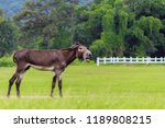 Blurred photo mule is a mixed...