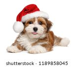 Stock photo happy smiling bichon havanese puppy dog is wearing a christmas santa hat isolated on white 1189858045