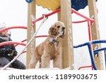 cute playful dog pet at winter... | Shutterstock . vector #1189903675