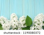 white lilac flower on blue... | Shutterstock . vector #1190080372