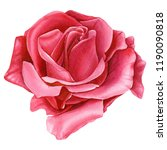 beautiful rose  red flower on... | Shutterstock . vector #1190090818