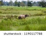 thai buffalo in the cornfield | Shutterstock . vector #1190117788