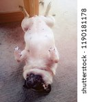 pug dog sleeping on floor  | Shutterstock . vector #1190181178
