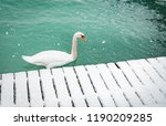 graceful white swan swimming by ... | Shutterstock . vector #1190209285