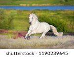 white horse free run in white...   Shutterstock . vector #1190239645