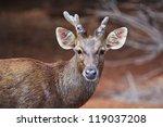 Deer And Sheep Statue