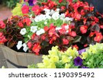 multi colored flowers in barrel   Shutterstock . vector #1190395492