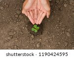 hand watering small plant grow...   Shutterstock . vector #1190424595