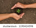 hand protect small plant grow...   Shutterstock . vector #1190424598