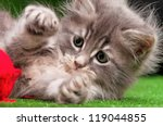 Stock photo cute gray kitten playing red clew of thread on artificial green grass 119044855