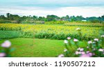 sun flower in green field ... | Shutterstock . vector #1190507212