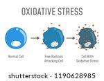 oxidative stress diagram. free... | Shutterstock .eps vector #1190628985