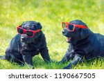 two funny labrador retriever...   Shutterstock . vector #1190667505