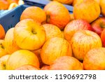 fresh and juicy citrus fruits... | Shutterstock . vector #1190692798