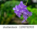 blue orchid with greenery... | Shutterstock . vector #1190732935