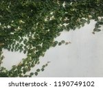 green creeper on old wall   Shutterstock . vector #1190749102