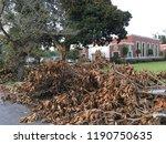 wilmington  nc   usa  ... | Shutterstock . vector #1190750635