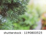 selective focus plant on... | Shutterstock . vector #1190803525