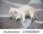 ginger fluffy kitten is... | Shutterstock . vector #1190838835