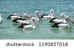 A flotilla of australian...