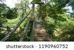 lush rainforest  river trees... | Shutterstock . vector #1190960752