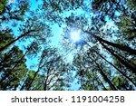 boa keaw silvicultural research ... | Shutterstock . vector #1191004258
