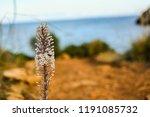 Mediterranean Landscape Of...